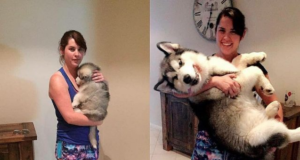 Sweet Before And After Pictures Of Dogs Who've Grown Up