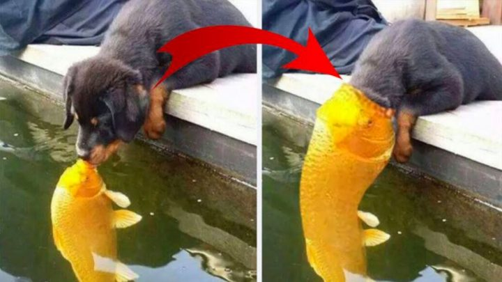 This Puppy Kissing A Fish Inspires A Hilarious Photoshop Battle