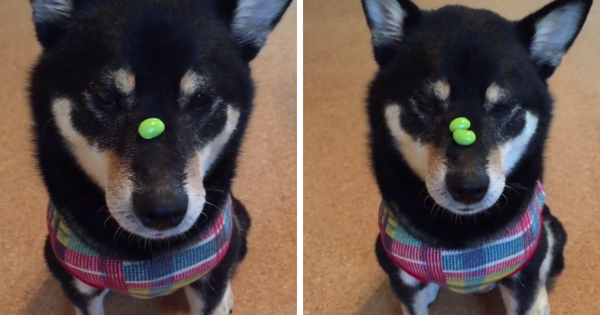 This Dog Is The Fastest Treat-Catcher Alive