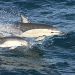 Mother Dolphins