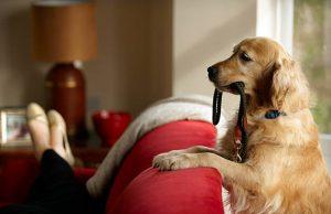 Signs of Dog Intelligence