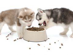 food for husky