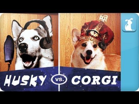 Rap Battle: Husky Vs Corgi