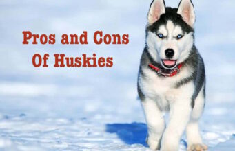 pros and cons of huskies.jpg