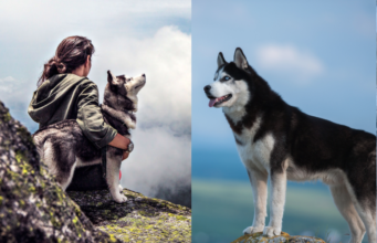 Activities Your Husky Can Do In The Mountains