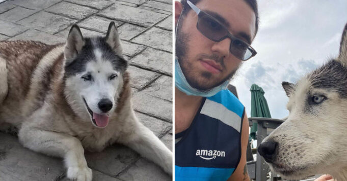 Amazon Delivery Driver Jumps Into Pool To Save Senior Husky Dog From Drowning In Pool