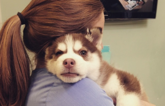 Adorable Pics Of Owners Hugging Their Huskies