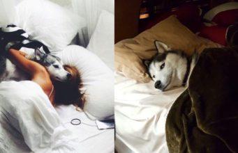 Women Sleep Better With Dogs
