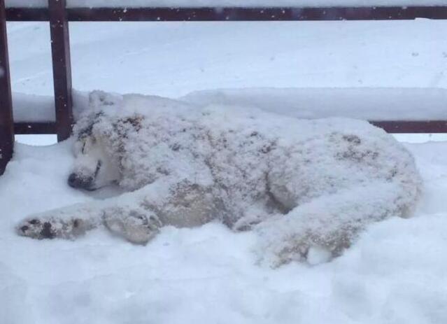 Ridiculous Pics Of Huskies Sleeping Positions