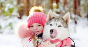 Husky is Better Than Any Babysitter