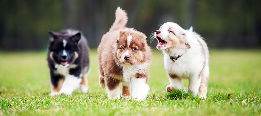 Tips On Socializing A Confident Puppy