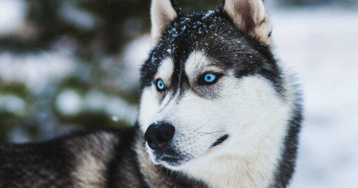 10 Most Beautiful Dogs In The World Ohl