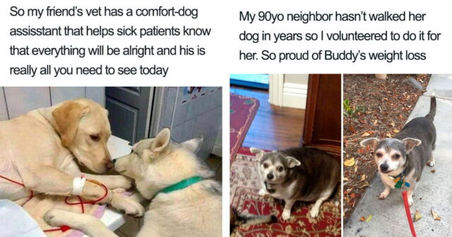 30 Posts About Dogs And Puppies To Prove That They're The Best Thing Ever