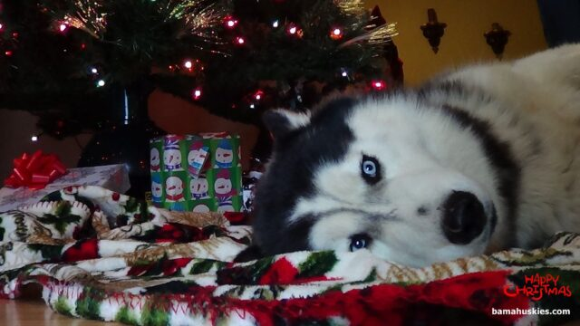 10 Adorable And Fun Ways To Celebrate Christmas With Your Fur Babies