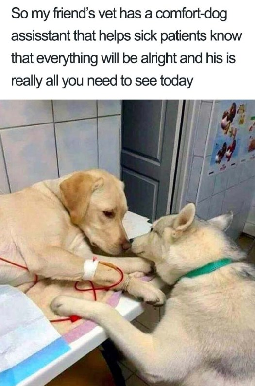 pets are our true love