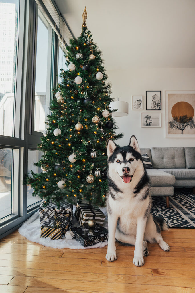 Celebrate Christmas With Your Fur Babies