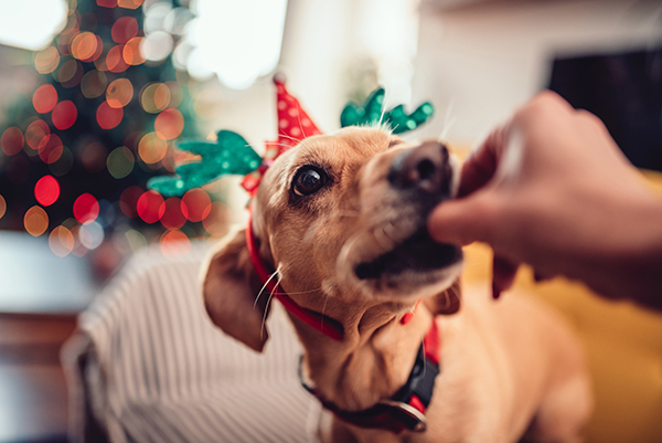 dog-friendly activities for holidays