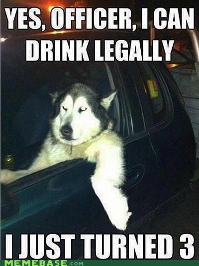 Funny Drunk huskies
