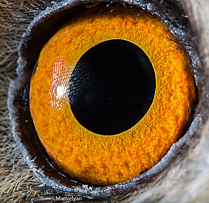 how unique animal eyes are
