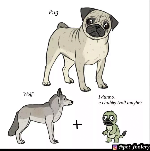 Origins Of 'Unique Dog Breeds'