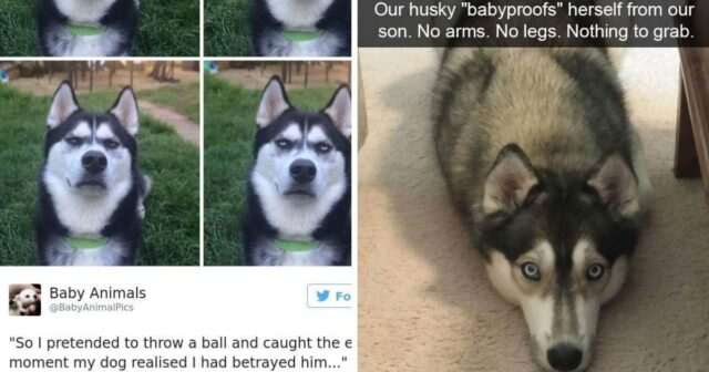 Cute And Funny Dog Pics To Lift Your Mood And Make Your Day