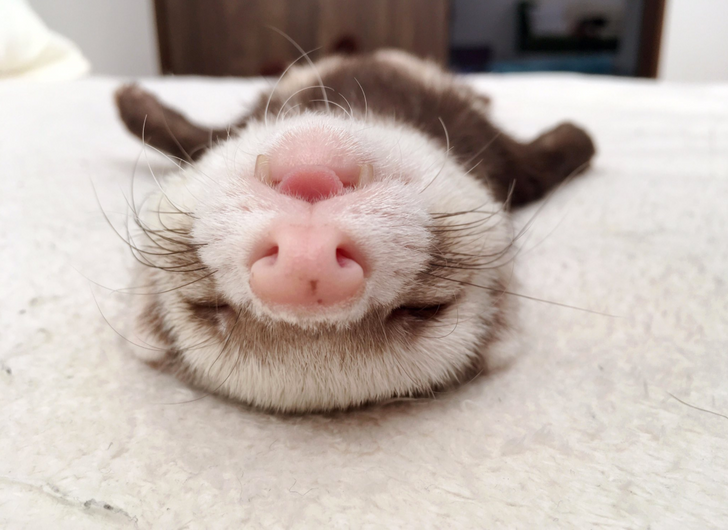 Animals Who Broke The Cute-o-meter With Their Bleps