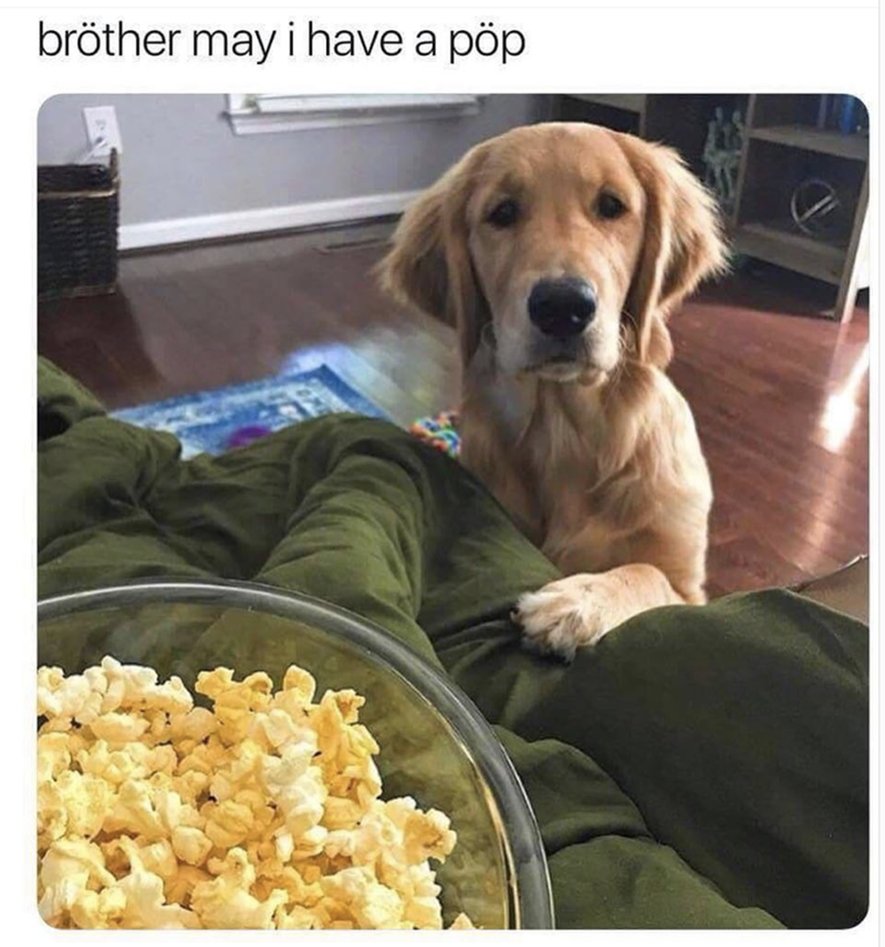 lol dogs