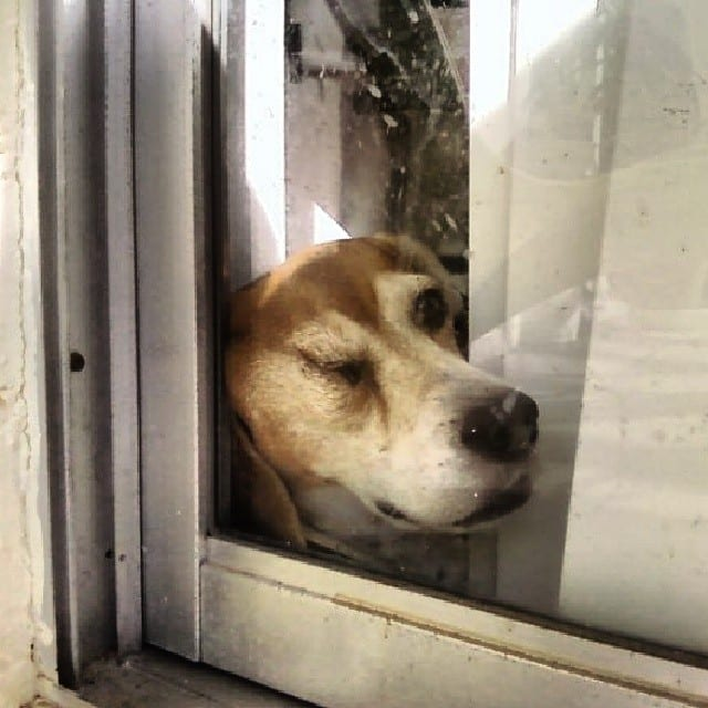 Dogs Who Don't Understand Windows