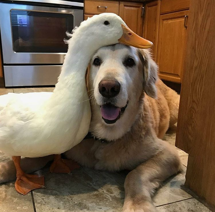 Good Dogs Showing Affection