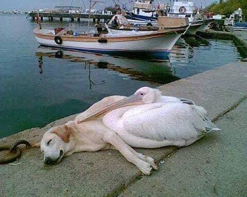 Pets Winning Hearts