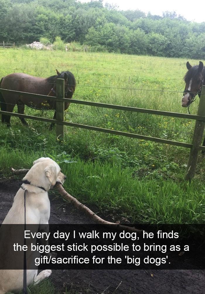 funny doggo snaps