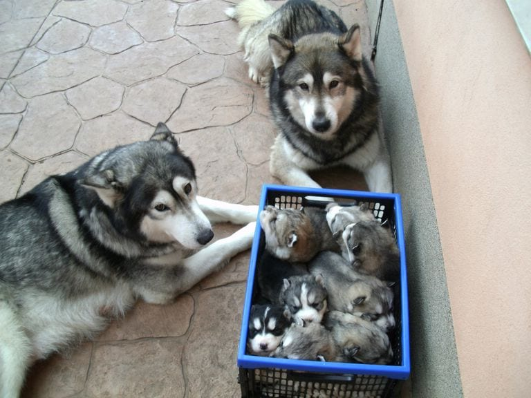 animal parents are tired of their babies
