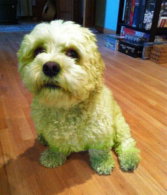 Dogs Who Decided To Play In Freshly Cut Grass