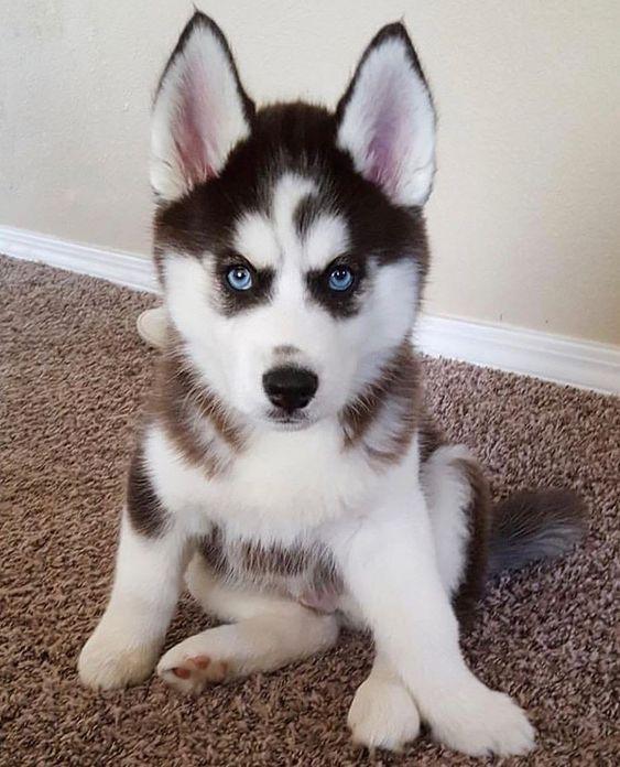 Adorable cute Doggo