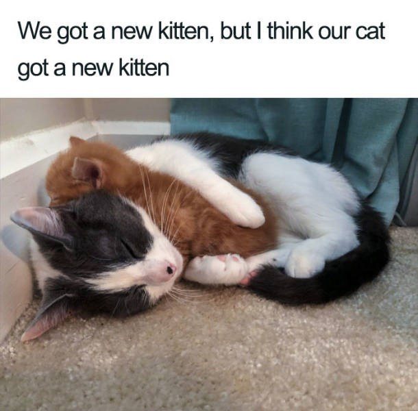 adorable cat posts