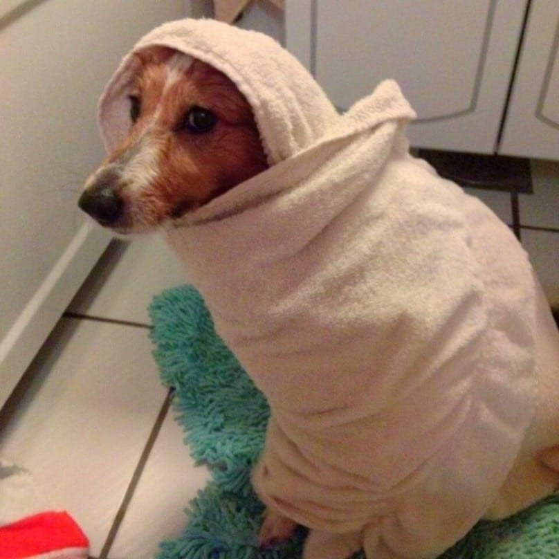 Dogs That Don't Approve Bath Time